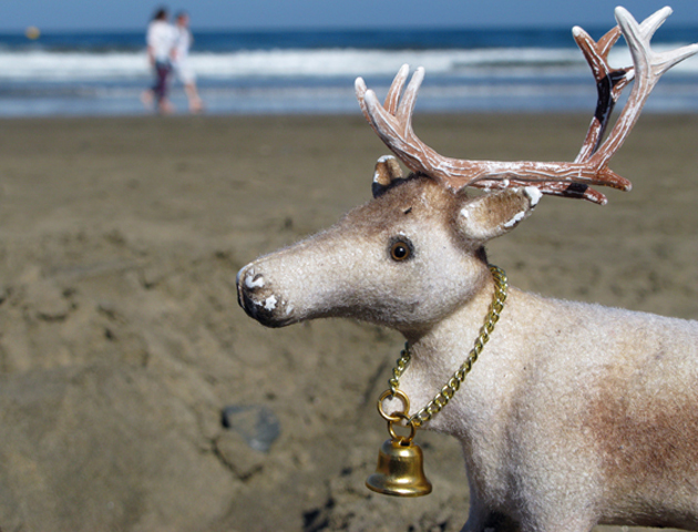 Little Finnish Reindeer in Canary Islands, 2009.