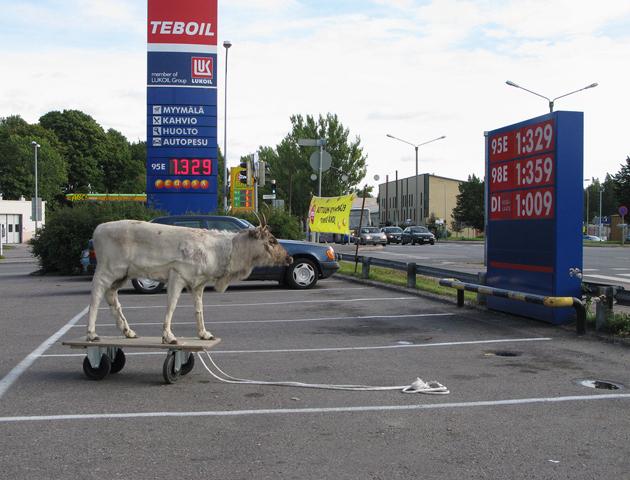 Reindeer on the way to Vantaa, 2009.