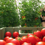 Organic farming, existing degrowth, still from Kohtuus / Degrowth video, 2012.