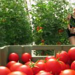 Organic farming, existing degrowth, still from Kohtuus / Degrowth video, 2012.
