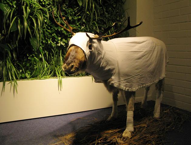 Reindeer's Albedo Suit, 2012.