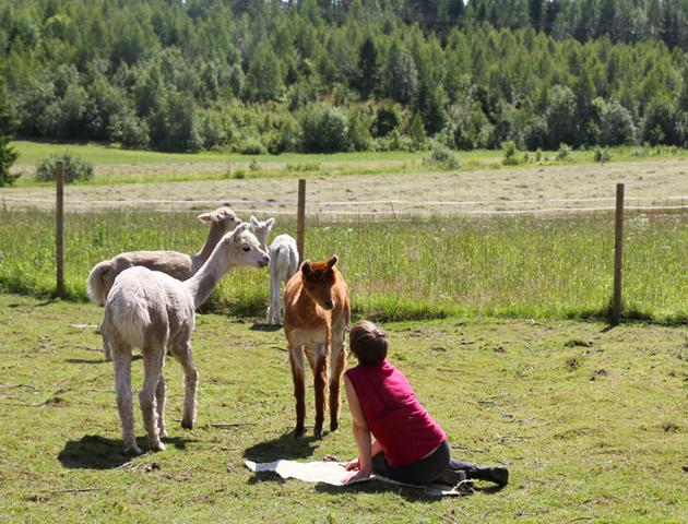 Alpaca Oracle, 2014. Photo: Jenni Valorinta