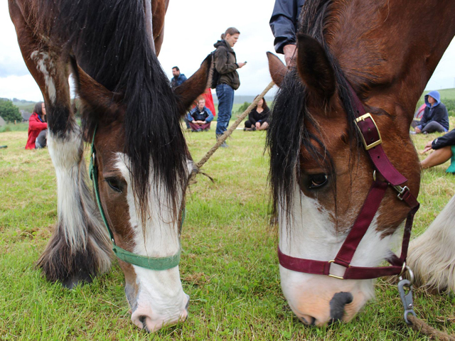 Windsor and Malcom during Clydesdale Oracle, 2015. Photo by SSW