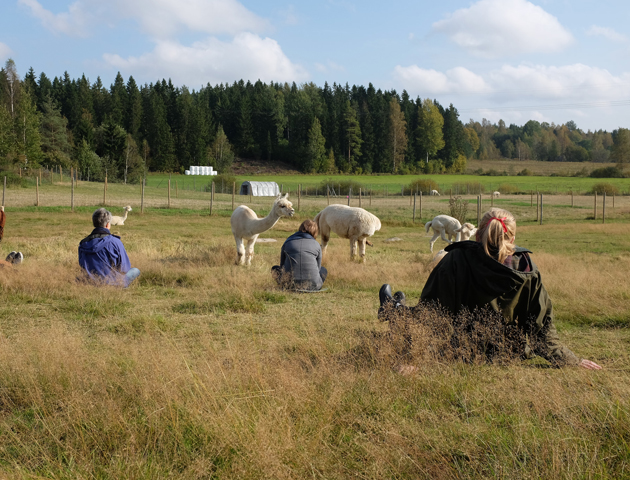 Alpaca Oracle, 2015. Photo: Antti Ahonen