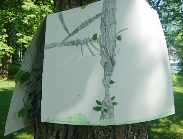 Puiden muotokuvat (tree portraits), 2018.