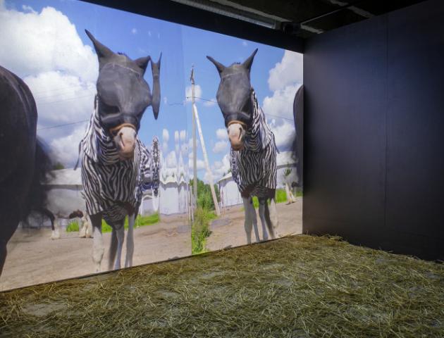 Com Scire, video installation view, 2020. Photo by Jenni Latva.